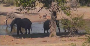 Tembe Elephants Park Live Water Hole Webcam