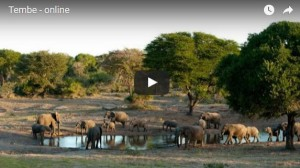 Tembe Elephants Water Hole Cam Tembe Elephants Park