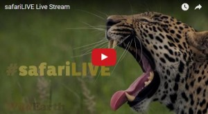 SafariLive YouTubeLive Streaming Animals Cam South Sfrica