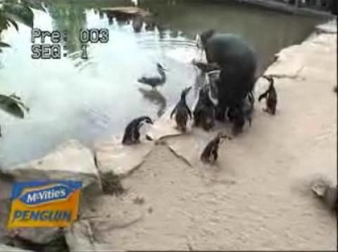 Live Penguins streaming video webcam Dublin Zoo