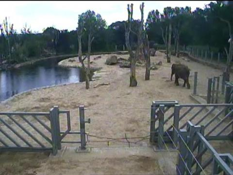 Live Elephants streaming webcam Twycross Zoo