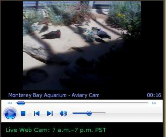 Live Streaming Video Webcams Directory