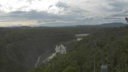 Skyrail Rainforest Cableway live streaming webcam