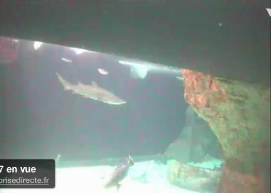 Live Sharks streaming cam Aquarium Du Croisic France