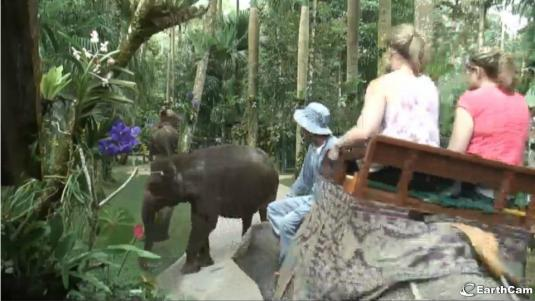 Live Elephant Safari Park Streaming HD Camera Ubud Bali Indonesia