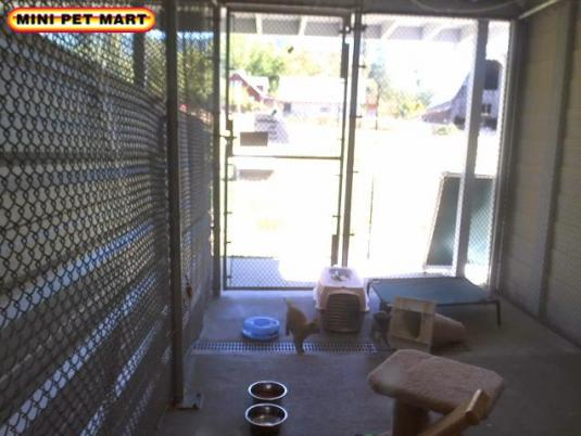 Critters Pets Live Streaming Animal Adoption Webcam Grants Pass Oregon