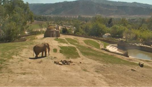 San Diego Animal Safari Park HD Live African Elephants webcam CA