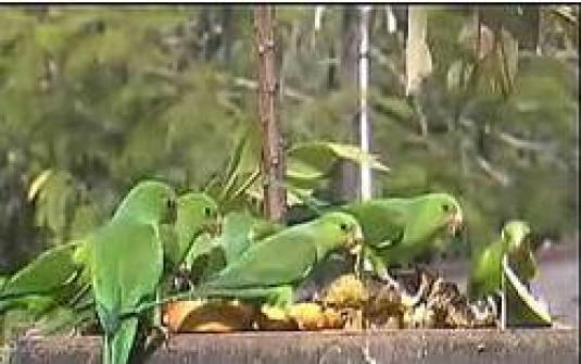 Atlantic Rainforest Live Streaming Wildlife Birds Webcam Brazil