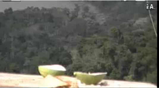 Atlantic Rainforest in Misiones Tropical Birds Live Streaming Birds Cam