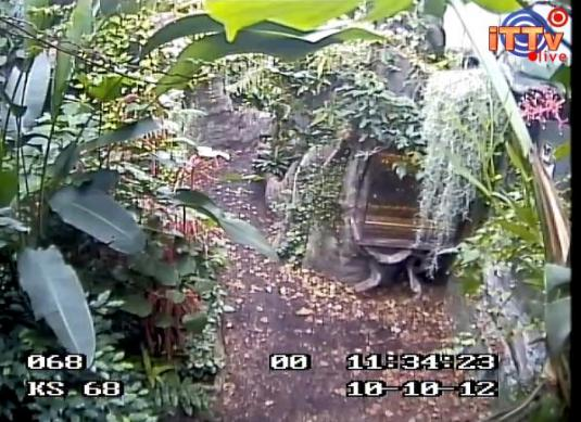 Butterfly House LIVE Streaming HD Webcam in Poland