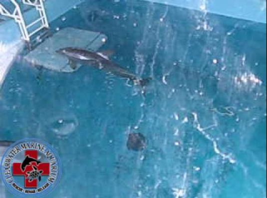 Clearwater Marine Aquarium Winter bottlenose dolphin live streaming webcam
