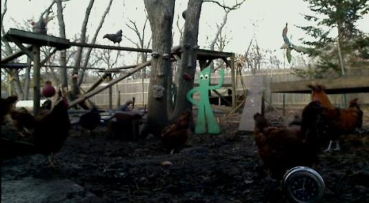 Chickens Yard Live Streaming Chickens webcam