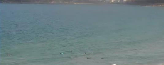 Manly Beach Live Streaming Surfing Weather Web Cam Sydney