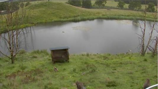Highland Wildlife Park Live Video Streaming Snow Monkeys Web Cam