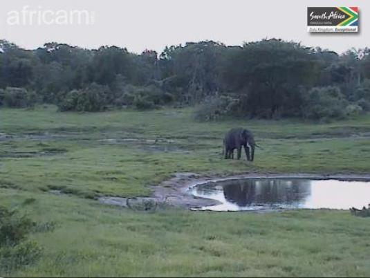 Live Streaming Tembe African Safari Elephant Webcam, South Africa