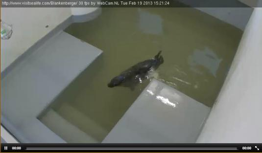 Live Streaming Seal House Animal Webcam, Belgium