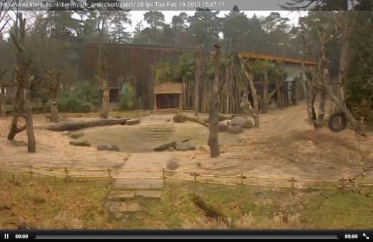 Live Streaming Elephant Webcam, Amersfoort Zoo, Holland