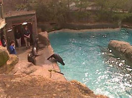 Pittsburgh Zoo and Aquarium Live Streaming Sea Lions Web Cam