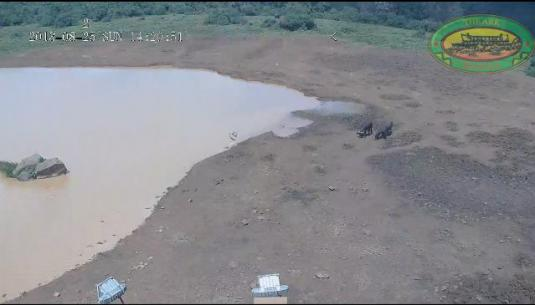 The Ark Safari Park Lodge Live Waterhole Animals Webcam Aberdale National Park Kenya