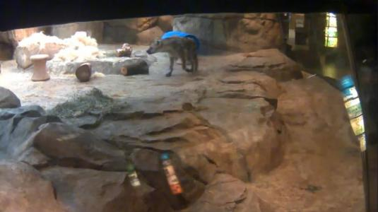 Milwaukee County Zoo Live African Lions and Hyenas Webcam Wisconsin