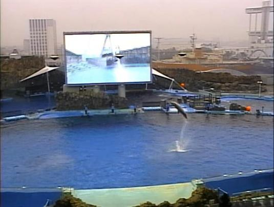 Dolphins Live Streaming Webcam Nagoya Aquarium Japan