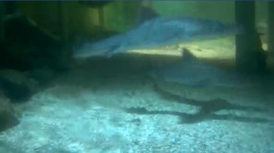 Rate this camera from Lake District Coast Aquarium Sharks Cam - South ...