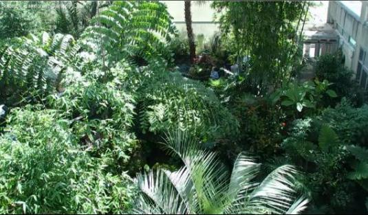 Florida Museum of Natural History Butterflies Rainforest Exhibit Webcam Florida