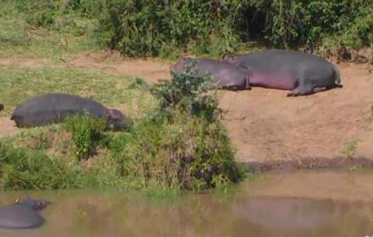 South africa webcam watering hole