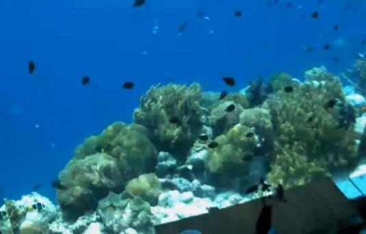 Kihavah Huravalhi Island Underwater Indian Ocean Coral Reef Webcam Maldives