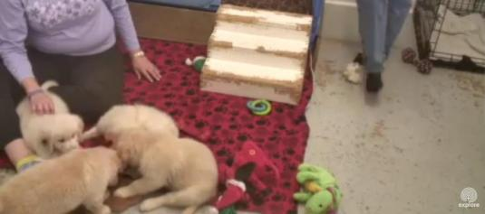 Warrior Canine Connection Puppy Enrichment Center Puppies Web Cam