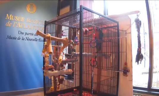 Rainbow Macaw Parrot Web Cam Maritime Museum of the Atlantic Halifax Canada