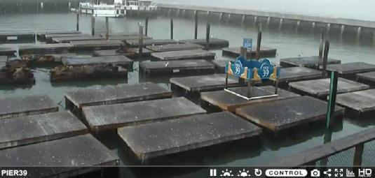 Pier 39 Marina West Harbor Sea Lions Web Cam San Francisco