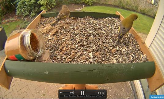 Birds Feeder Live Birds Watching Web Cam Emmen Netherlands