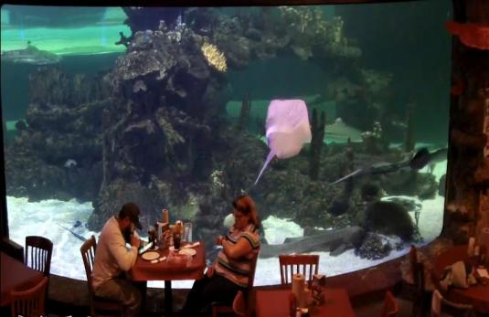 Dillons KC Style Barbeque Live Wildlife World Zoo Sharks Aquarium Web Cam Arizona